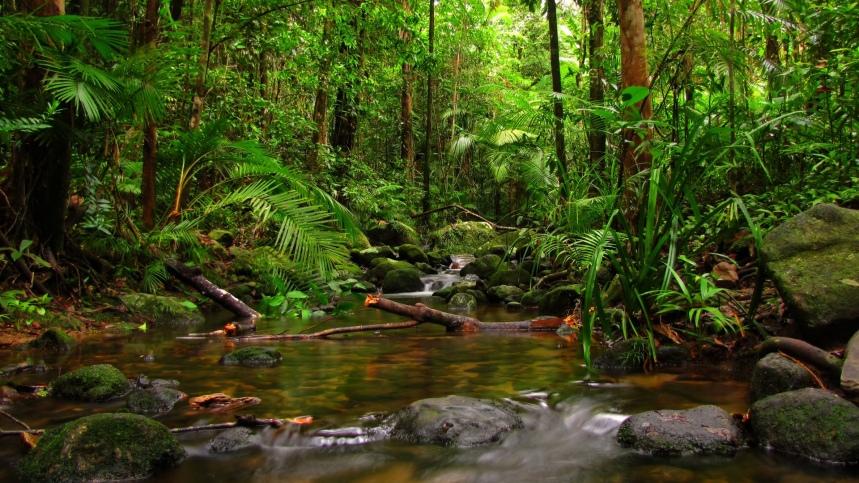 jungle-nature-wallpaper.jpg